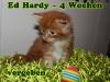 ed-hardy_4