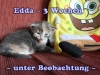edda_3b