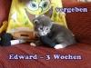 edward_3a