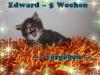 edward_5