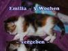 emilia_3b