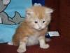 kitten8