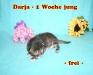 1_Darja