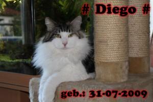 Diego vom Storchenwäldchen